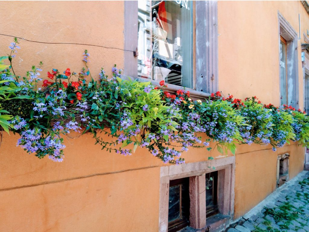 Flowers in Colmar France