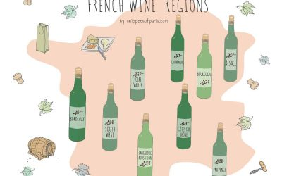 French Wine Regions: Easy Guide to the Best French Wines