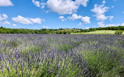 Lavender Fields: Local's Guide to Visiting Valensole in Provence