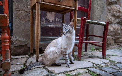 French Cat Names: 144 cute names for your kitten