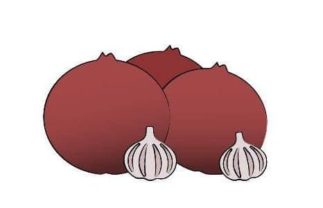 onions and garlic illustration