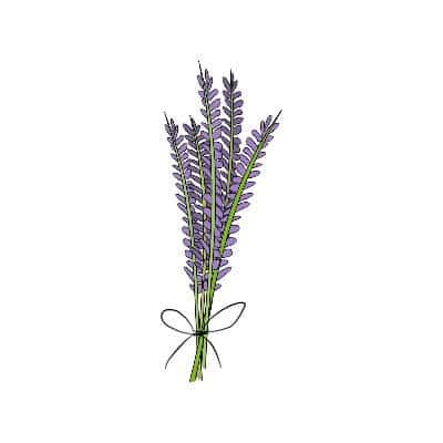lavender illustration for tattoo