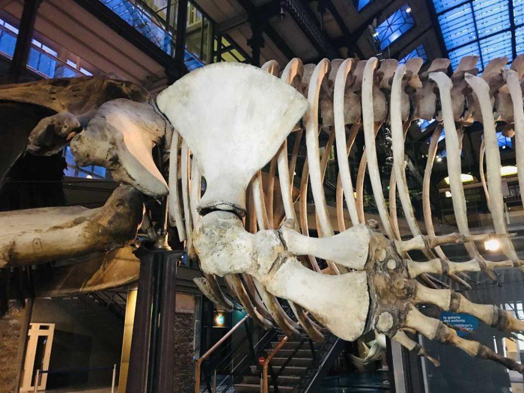 Dinosaur Bones Galerie de Paléontologie et d'Anatomie