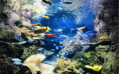Visiting the Aquarium de Paris