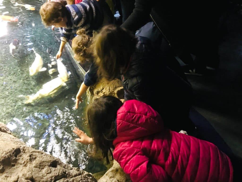 Visiting the Aquarium de Paris 1